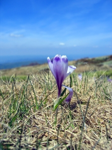 mountain flower www.mary__humphrey.com